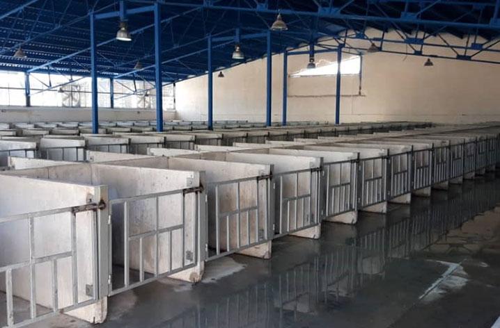 تکمیل-سالن-300-راسی-پرورش-گوساله-شیرخوار-پروژه-تکمیل-ظرفیت-واحد-دامپروری-به-4500-راس-مطابق-پرورانه-بهره-برداری