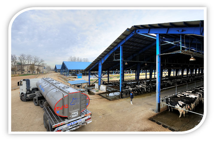 rabta-company-dairy-production
